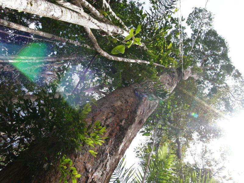 Kmen velikána džungle 2 - Brazílie- Amazonie a Manaus