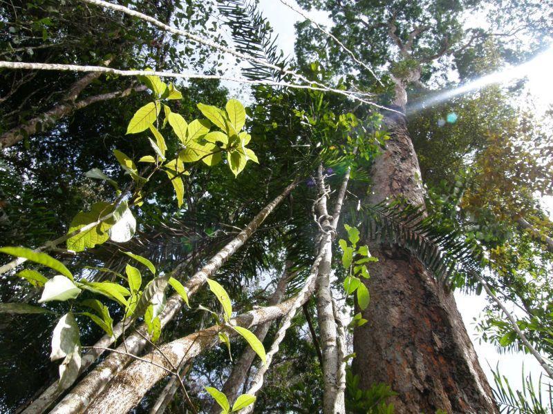 Kmen velikána džungle - Brazílie- Amazonie a Manaus