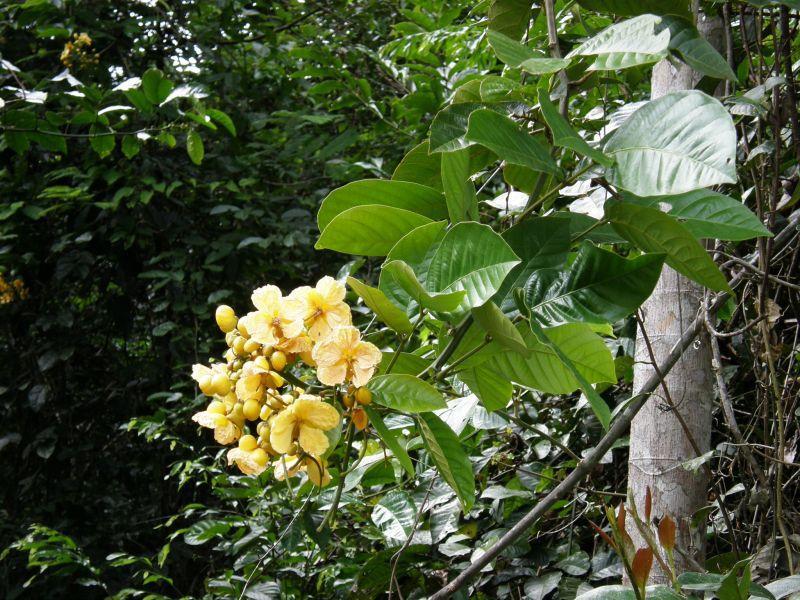 Květy pralesa - Brazílie- Amazonie a Manaus