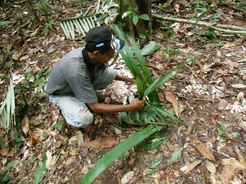Raimundo vyrábí koš z palmového listu - Brazílie- Amazonie a Manaus