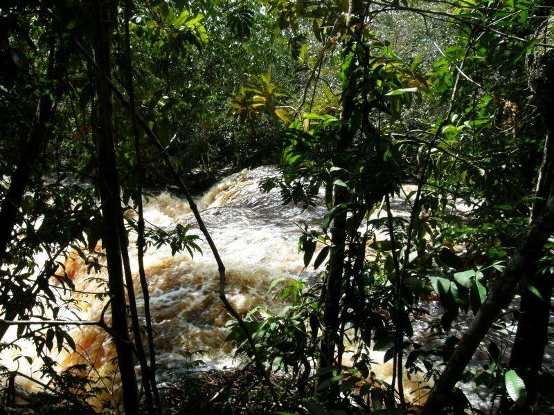 řeka se žene pralesem - Brazílie- Amazonie a Manaus