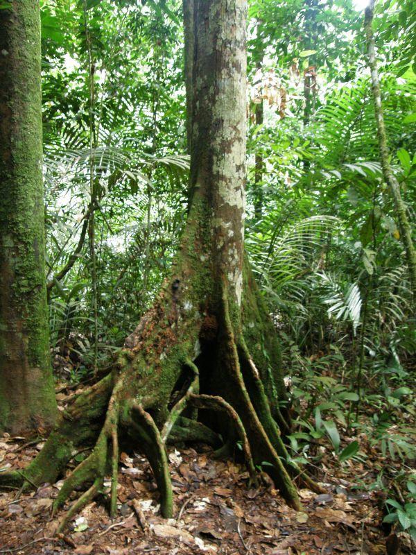 Strom - Brazílie- Amazonie a Manaus