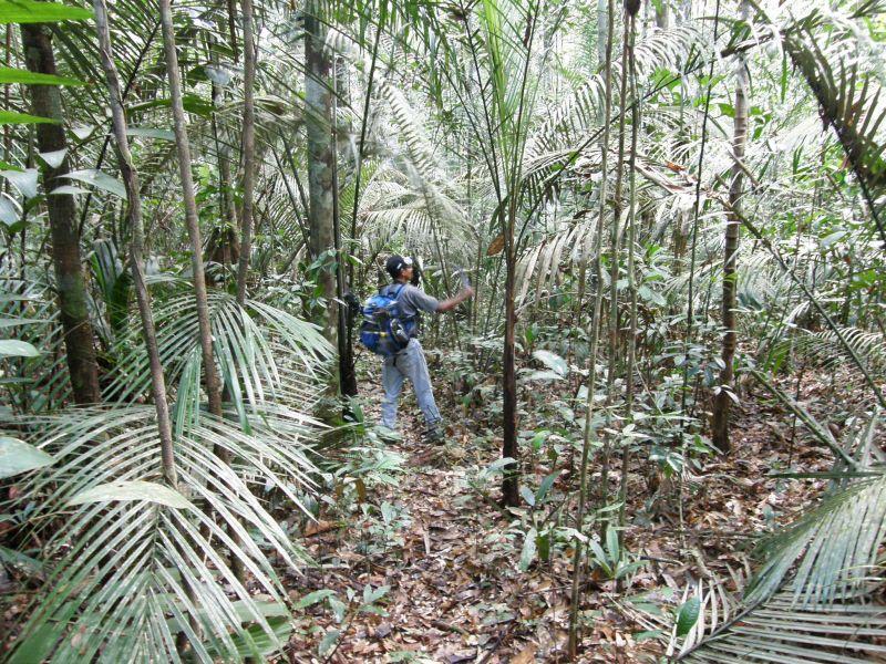Ve stopách Raimunda vzhůru do selvy 2 - Brazílie- Amazonie a Manaus
