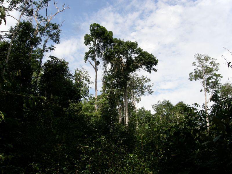 velikáni džungle - Brazílie- Amazonie a Manaus