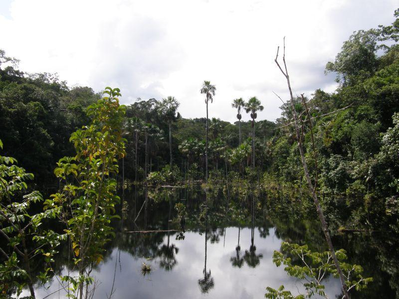 Vhled do pralesa 2 - Brazílie- Amazonie a Manaus
