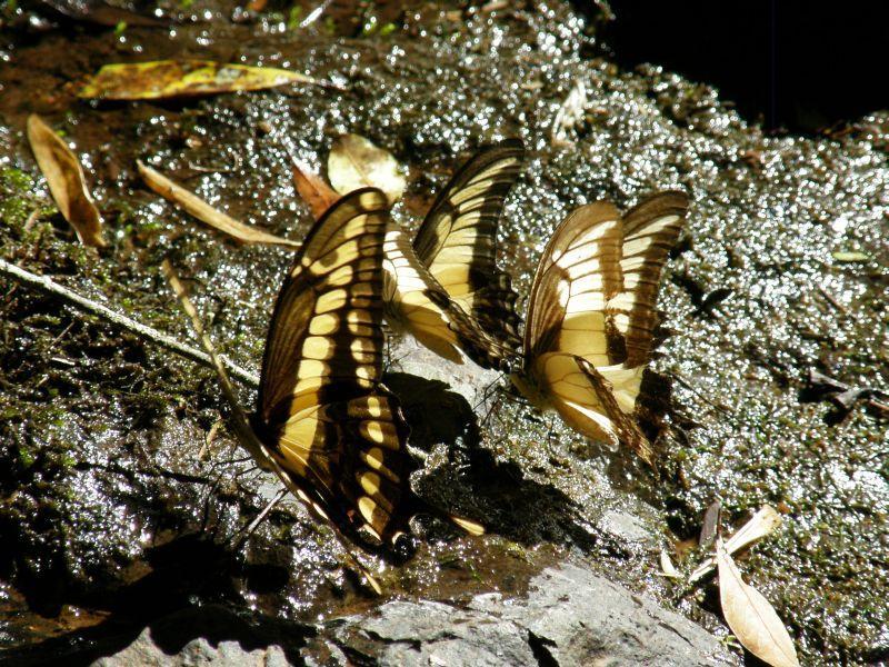 Motýlí láska - Vodopády Iguazu (Argentina)