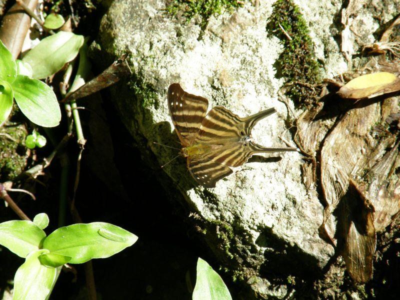 Papillon - Vodopády Iguazu (Argentina)