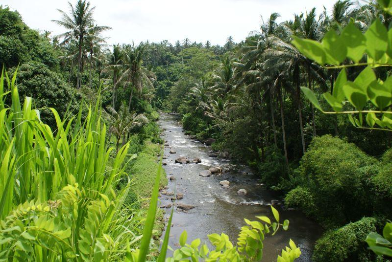 Okolo Ubudu - Indonésie- Bali