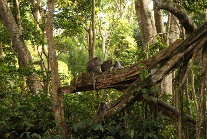 Opičí spolupráce - Indonésie- Bali