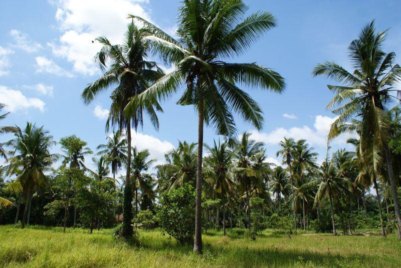 Palmy - Indonésie- Bali