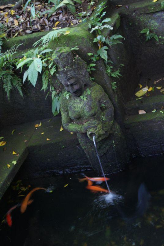 ryby u pramene - Indonésie- Bali