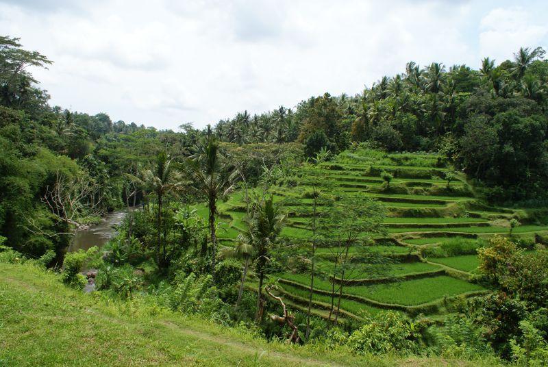 Rýžové políčka 3 - Indonésie- Bali