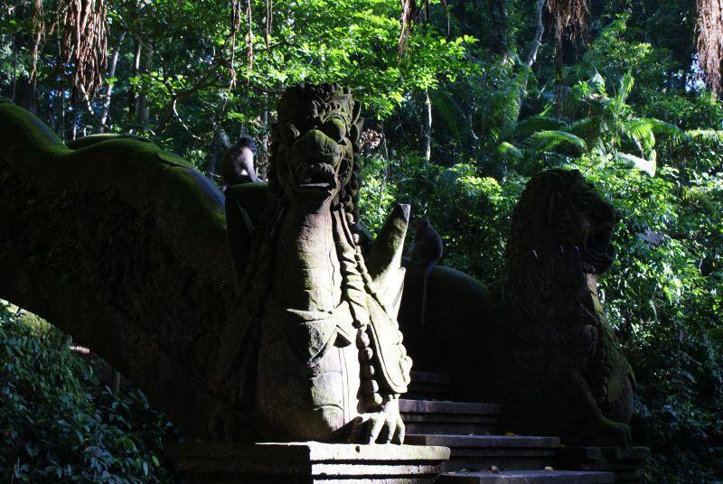 Světlo pozdního odpoledne si razí cestu Monkey Forest - Indonésie- Bali