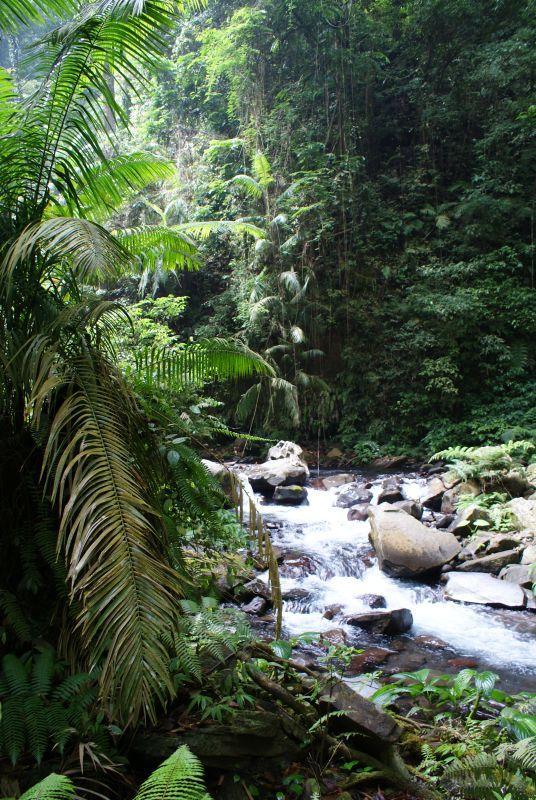 Divoká příroda - Indonésie- Lombok