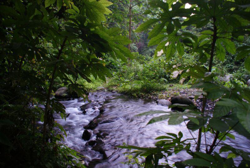 Lesní říčka poblíž Senaru 2 - Indonésie- Lombok