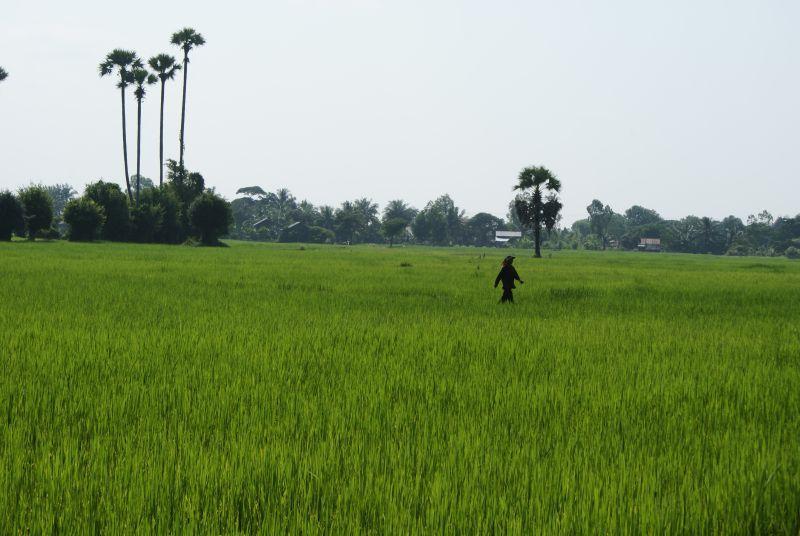 Pochod rýžovým polem - Kambodža- Phnompenh a okolí