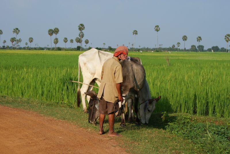 Zemědělec - Kambodža- Phnompenh a okolí