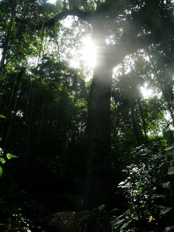 světlo v korunách - Kolumbie