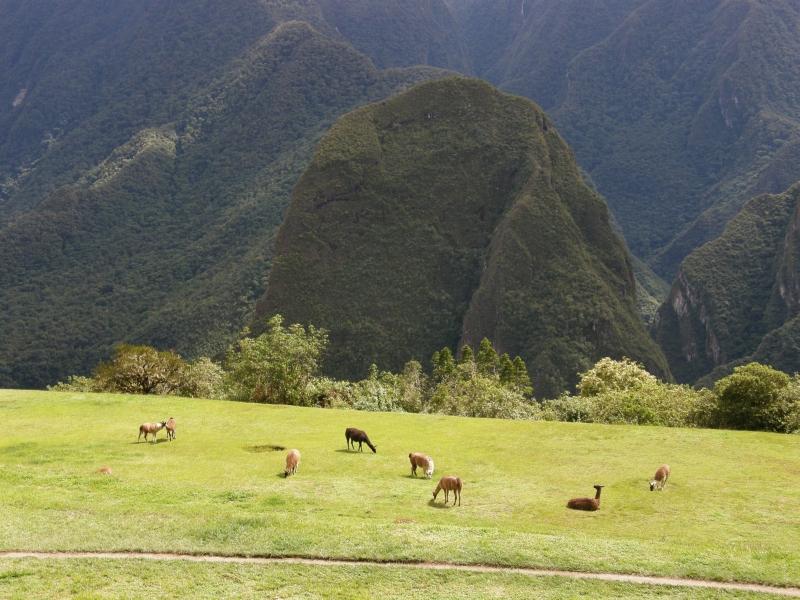 Peru- Machu Picchu a Aguas Calientes - 81 - Peru- Machu Picchu a Aguas Calientes