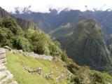Peru- Machu Picchu a Aguas Calientes - 84 - Peru- Machu Picchu a Aguas Calientes
