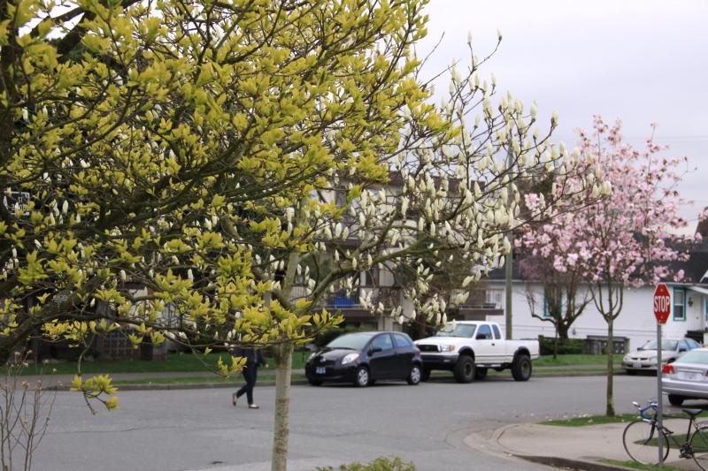 Vancouver spring 2012 photo no. 27