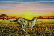 Cheetah - paintings