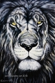 Lion 1 - paintings